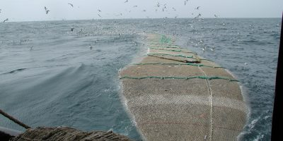 Fishing netting - Netmark